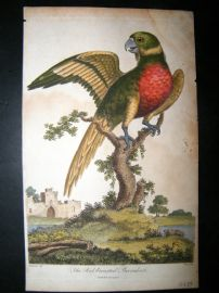 After George Edwards C1800 Hand Col Bird Print. Red Breasted Parrakeet